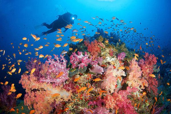The Dive Shop: Fiji MARCH 25 – APRIL 1, 2018
