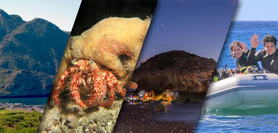 Dive Himalaya Bay Mexico